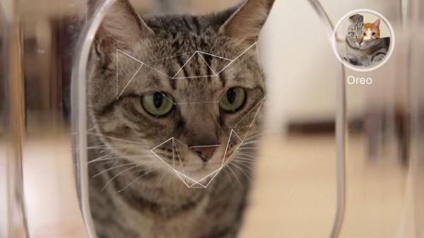 Photo of Bistro؛ گجت هوشمند برای زندگی بهتر گربه ها!