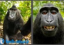 monkey-photo-copyright