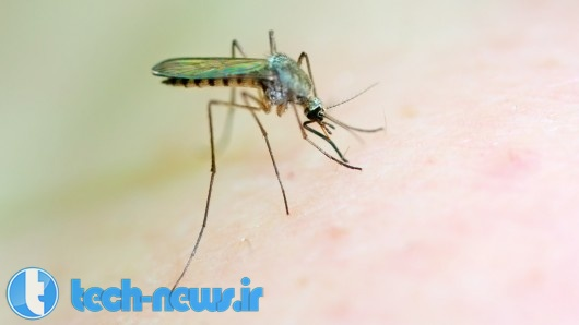 Photo of ترکیبات جدید شیمیایی (+)-SJ733، قادر خواهند بود تا با انگل مالاریا مقابله کنند!