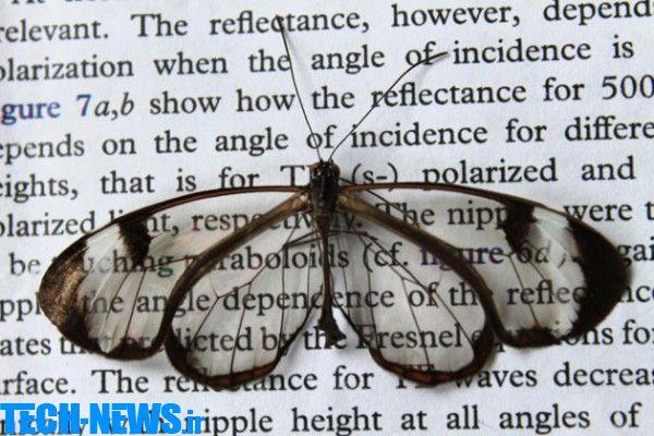 Photo of بالهای پروانه، میتواند کلیدی برای رسیدن به صفحهنمایشهای بدون حساسیت به نور باشد
