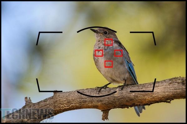 Nikon-Dynamic-Area-AF