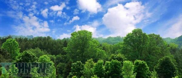 Photo of مطالعات جدید نشان از وجود 3 تریلیون درخت بر روی کرهی زمین دارد