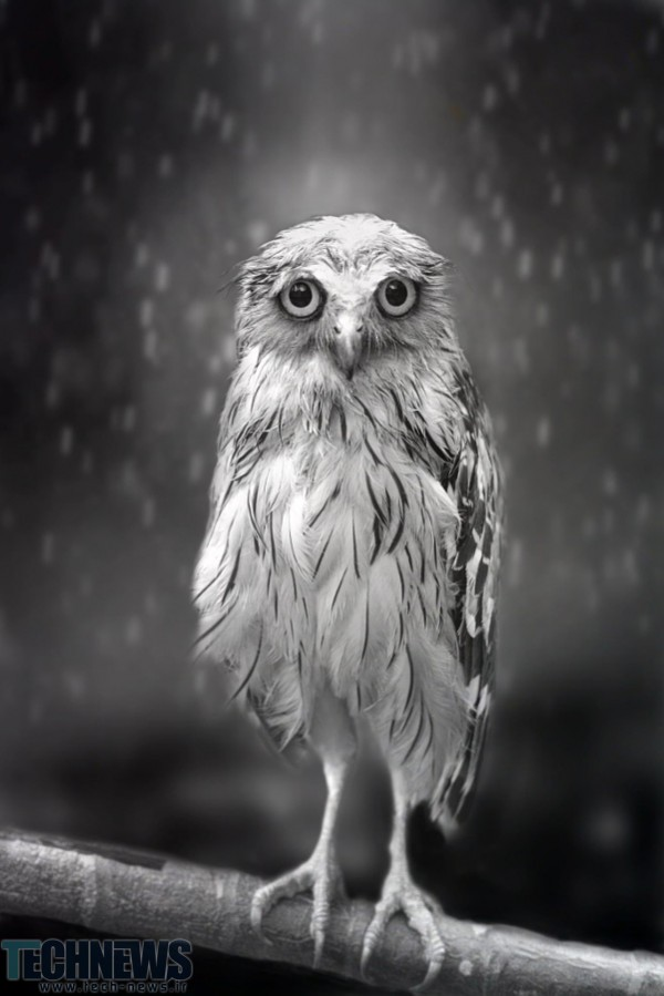 Standing in the rain... by Sham Jolimie on 500px.com