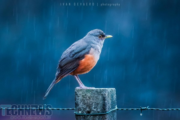 Last winter rain by Ivan Gevaerd on 500px.com