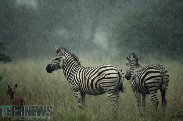 waiting for sunshine by Irca Caplikas on 500px.com