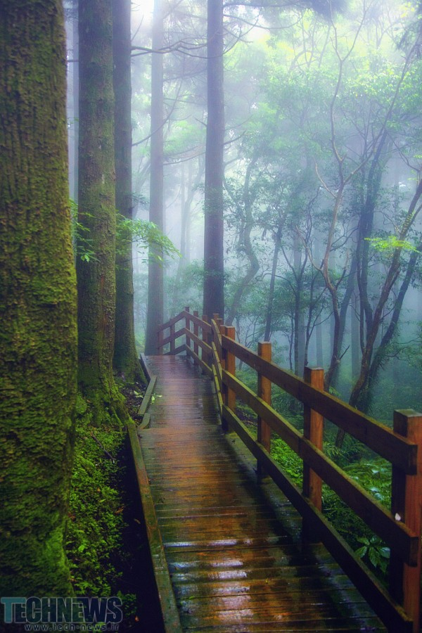 The wet wooden path by Hanson Mao(毛延延) on 500px.com