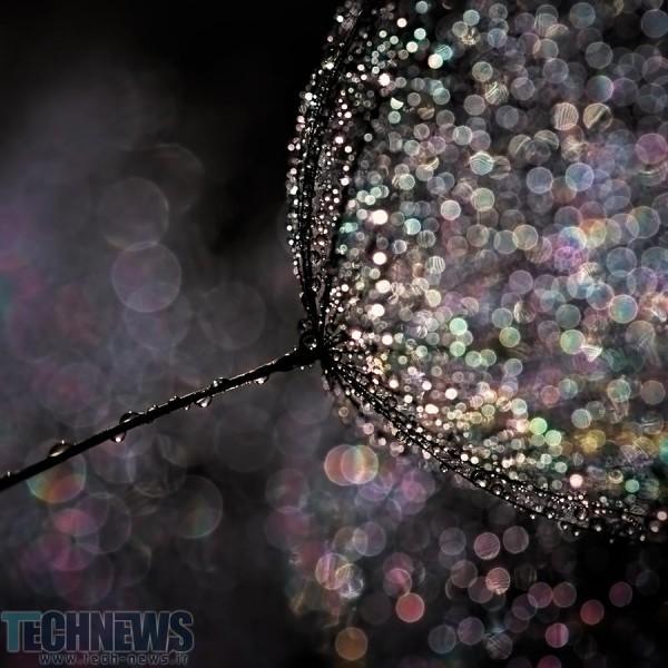 Seedling by Ursula Abresch on 500px.com