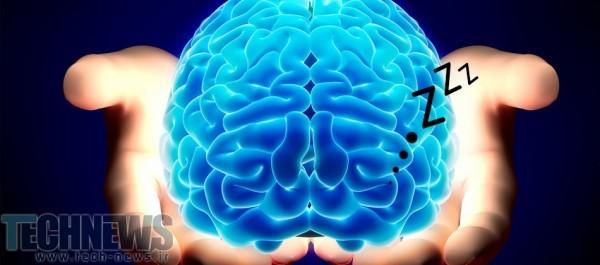 Photo of کدام بخش از مغز شما هنگام بیداری، در خواب است؟