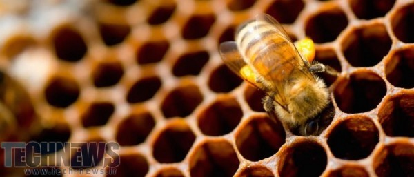 Research reveals Stone Age humans made use of beehives
