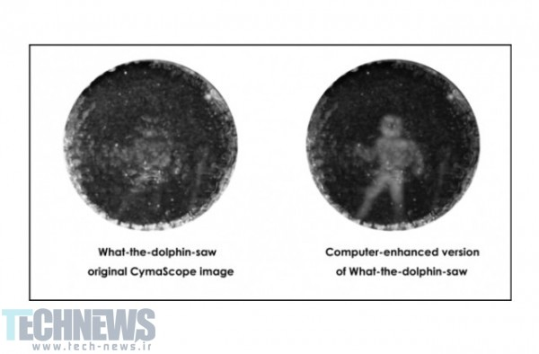 """Scientists Successfully """"See"""" What Dolphins See"""