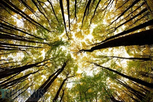 Photo of این درخت های مکانیکی از طریق باد انرژی تولید می کنند