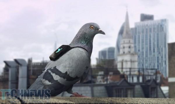 Photo of سنسورهای به کار گرفته شده روی کبوتران، میزان آلودگی لحظه به لحظه هوای لندن را توییت میکند
