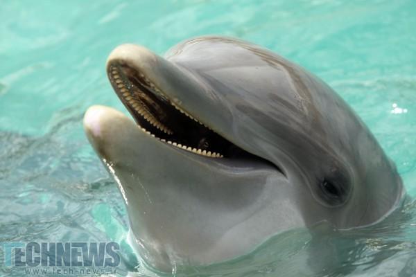 Photo of دانشمندان میگویند دلفینها با جملات کامل با یکدیگر صحبت میکنند