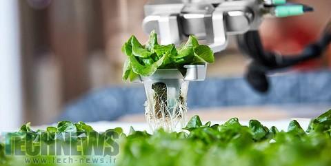 تولید سبزی در مزرعه های رباتیک امریکا