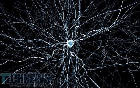 ابرکامپیوترها موفق به شبیه سازی مغز موش ها شدند