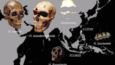 Photo of اکتشافاتی نوین در خصوص شاخه ای دیگر از شجره انسان ها