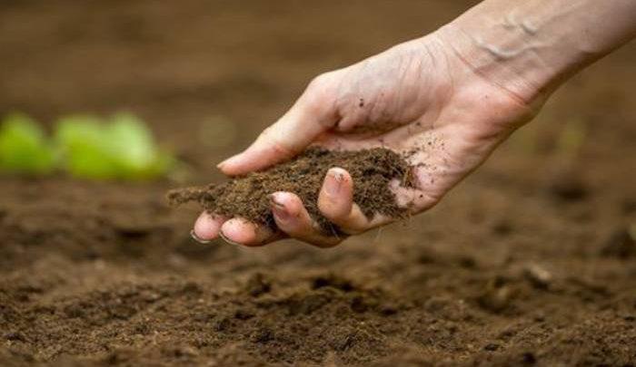 کشف باکتری ضداسترس از درون خاک