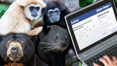 Photo of قاچاق حیوانات در خطر انقراض از طریق فیسبوک