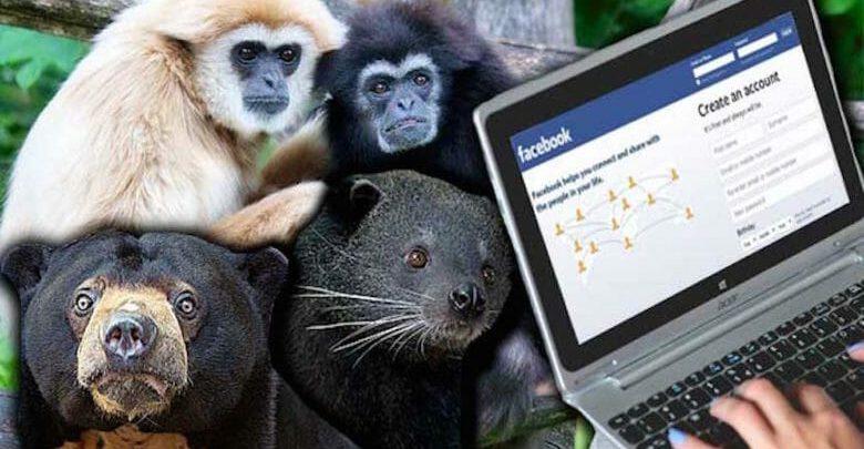قاچاق حیوانات در خطر انقراض از طریق فیسبوک
