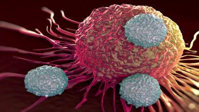 Photo of ایمونولوژیستها از اثر بخشی کاربرد سلول ایمنی T در درمان بیماریها می گویند