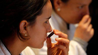 Photo of آموزش تشخیص بو به کمک هوش مصنوعی در Google Brain