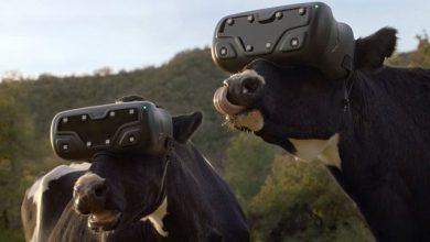 Photo of کاربرد هدست واقعیت مجازی در گاوداری ها