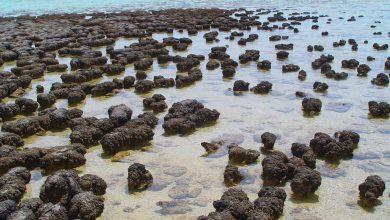 Photo of کشف سرنخ هایی از حیات مربوط به 3.5 میلیارد سال پیش