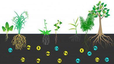 Photo of مبارزه با فقر آهن در جهان با کمک گیاهان