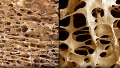 Photo of کاربرد مدلسازی استخوان انسان جهت ساخت ابزار صنعتی