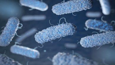 Photo of تولید نژادی از باکتری E.coli که دی اکسید کربن هوا را جذب می کند