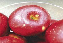Photo of سیب تازه کیهانی حاصل آمیختگی متقاطع دو نژاد مرغوب