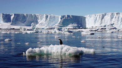 Photo of زنگ خطر افزایش دما در قطب جنوب به صدا درآمد