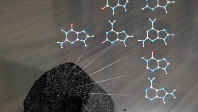 Photo of کشف یک پروتئین در شهاب سنگ؛ اثبات زندگی فرازمینی