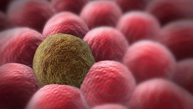 Photo of دانشمند ایرانی از امواج فراصوت برای تشخیص سلولهای سرطانی استفاده کرد
