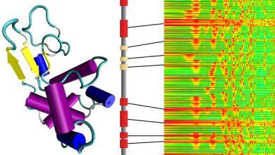 Photo of پروتئینهایی که از نتهای موسیقی ساخته شدهاند