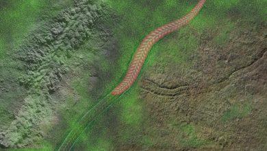 Photo of کشف فسیلی که بیش از 550 میلیون سال قدمت دارد