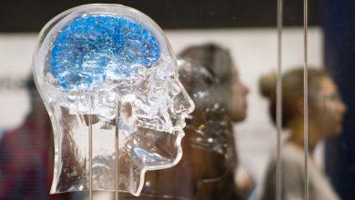 Photo of تبدیل نورونهای بیولوژیکی مغز به چیپهای کامپیوتری