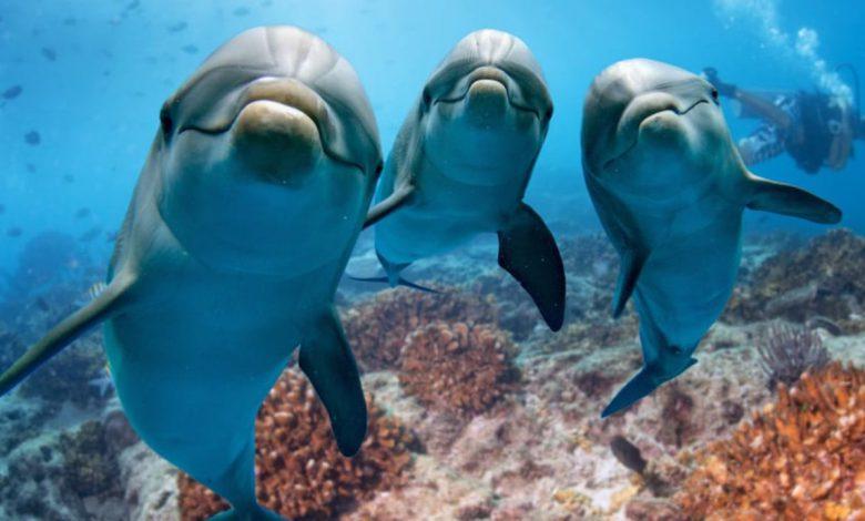 استفاده از دلفین رباتیک در آکواریوم و پارک های دریایی چین