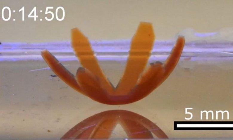 ساخت نوعی مواد نرم که توسط نور حرکت میکنند