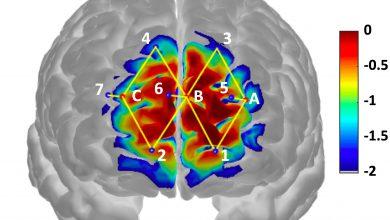 Photo of ساخت حسگر هایی که می توانند فعالیت شیمی مغز را نشان دهند