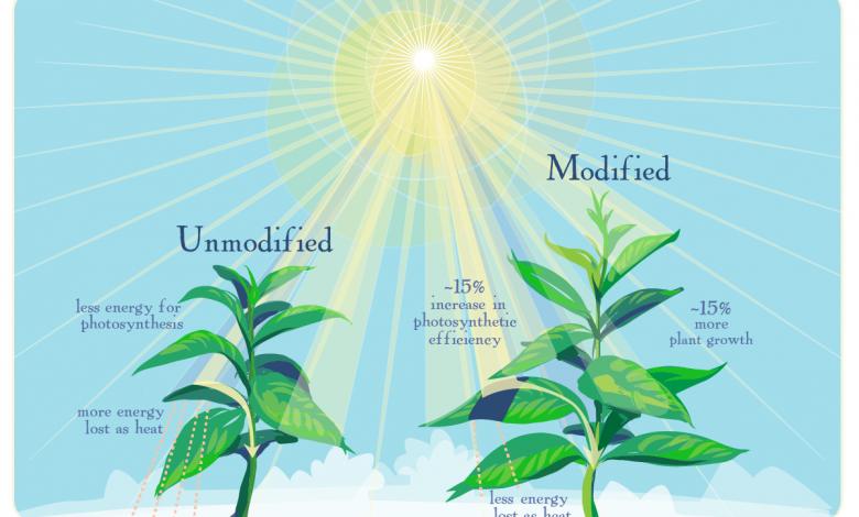 استفاده از نور فتوسنتز برای افزایش محصولات کشاورزی