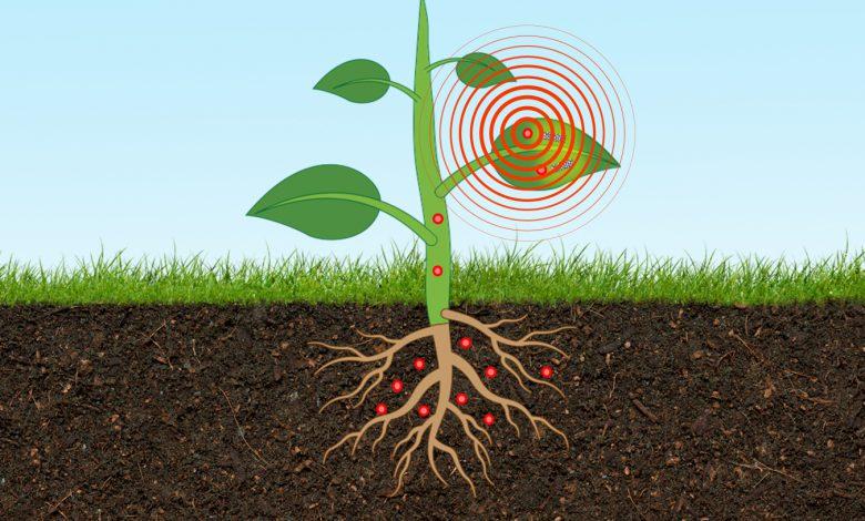 محققان MIT سنسور جدیدی برای تعیین سطح آرسنیک خاک توسعه دادند