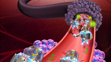Photo of نانوربات هایی از جنس DNA که می توانند سلول های سرطانی را تشخیص دهند