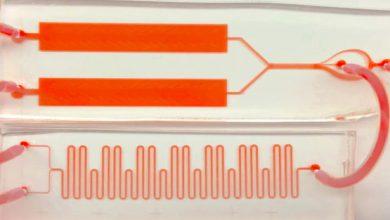 Photo of آزمایش خون بصورت فیلمبرداری شده توسط محققان دانشگاه استنفورد + ویدئو
