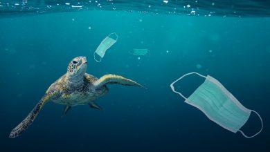 Photo of ورود ۱.۵۶ میلیارد ماسک به اقیانوس ها و تهدید کره زمین تا چند نسل آینده