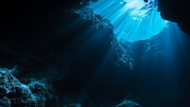 Photo of کشف یک میکروارگانیسم تک سلولی در اعماق اقیانوس با دمای بالاتر از نقطه جوش