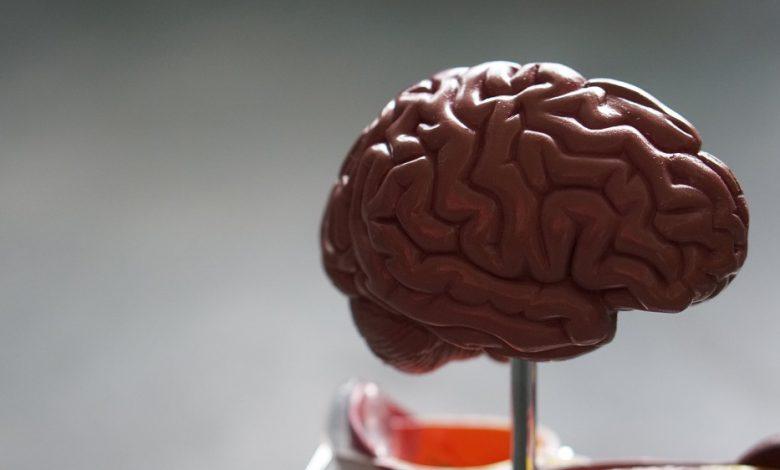 نانوحسگرهای تزریقی میتوانند فعالیت های مغز را بررسی کنند
