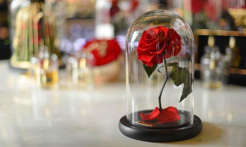 گل رز جاویدان 2