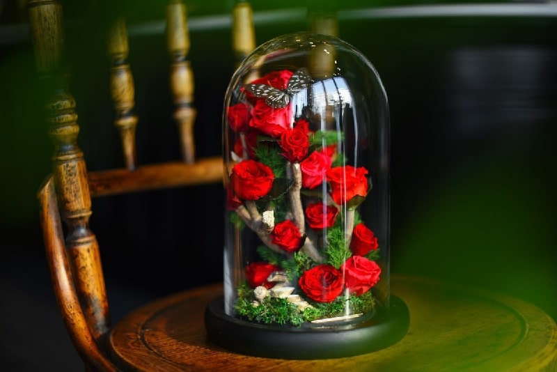 گل رز جاویدان